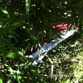 CBFM test strip wrapper in a the bush